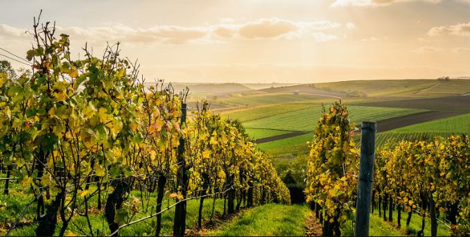 best wineries in Yarra Valley